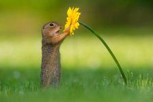 Застани и помирисај го цветот