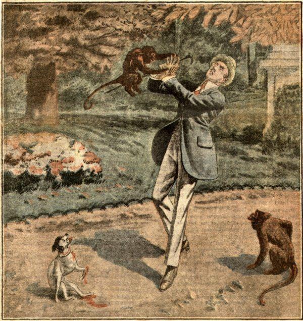 Кралот изеден од мајмуни.