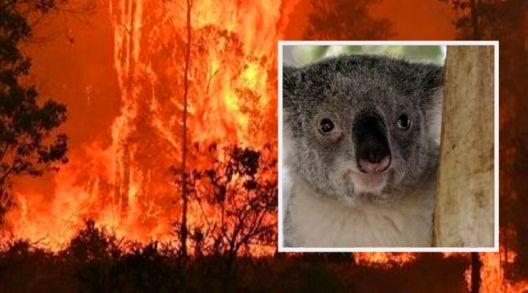 Половина милијарда животни умреле во пожарите во Австралија