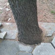 Дрвјата се сушат – градот молчи