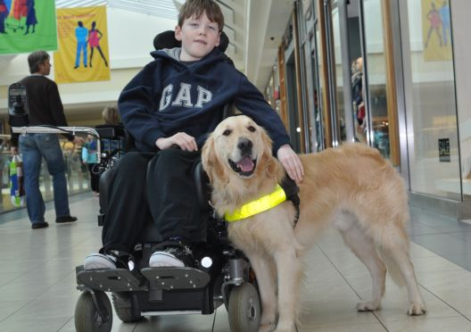 Луѓе со попреченост ќе се возат со куче придружник во автобус