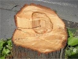 Чудо: Ликот на Коце Трајановски се појави на исечено дрво во Центар