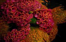 Тајниот живот на подводните цвеќиња