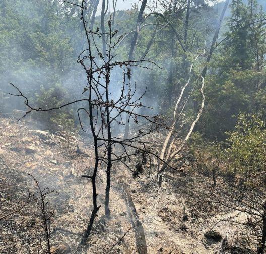 Пожарите лани проголтале најмалку шумска површина во последнава деценија