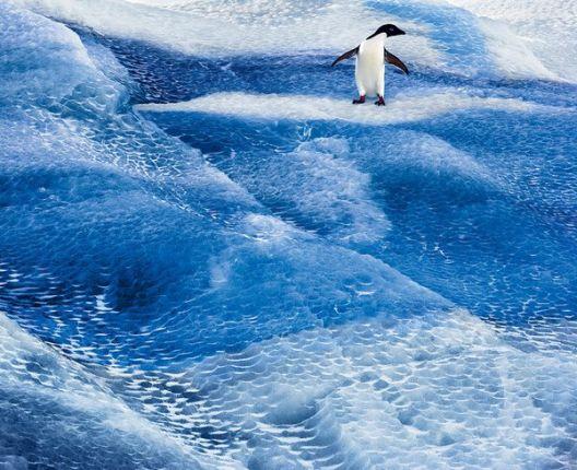 Лоша вест од Антарктикот