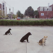 Улични кучиња