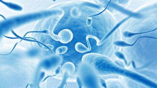 Спермата – лек или пациент?