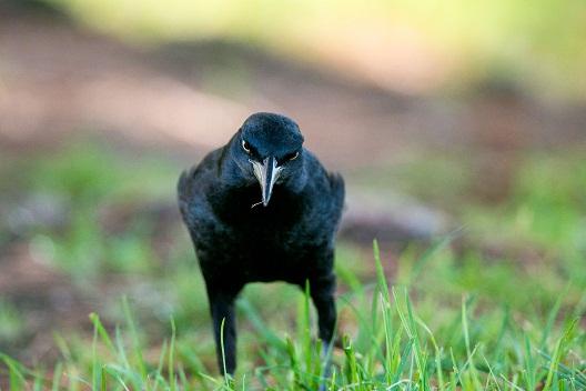 Птица која не простува