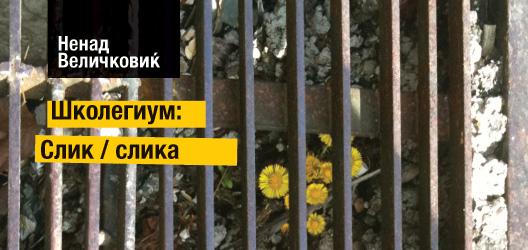 Школегиум: Слик / слика
