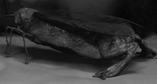 За жабата-молец, по потекло од Југославија