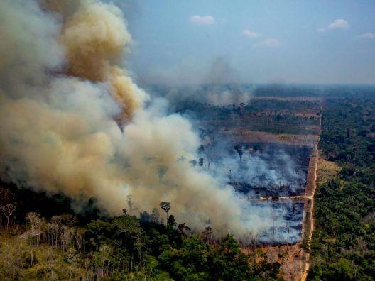Остварено уште едно предвидување на научниците: Амазонија станува јаглеродно позитивна