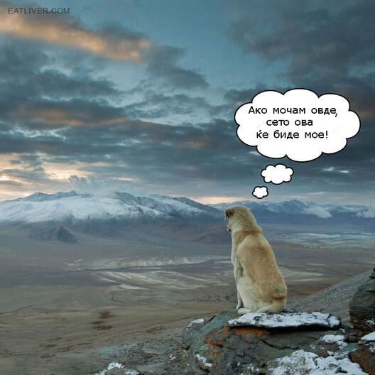 Кучешка логика