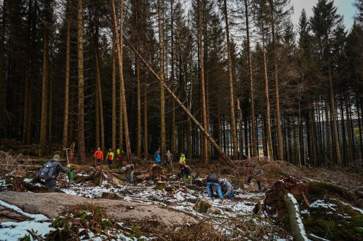 Германците се обидуваат да ги спасат шумите