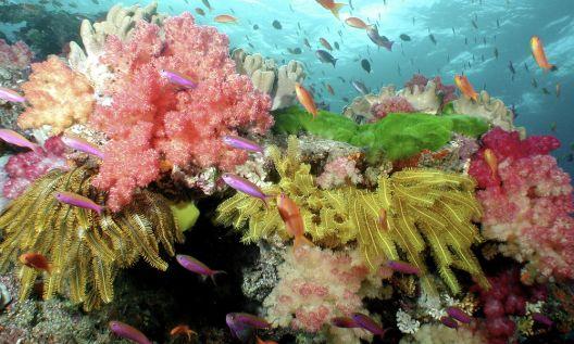 Дали коралите ќе ги преживеат климатските промени?