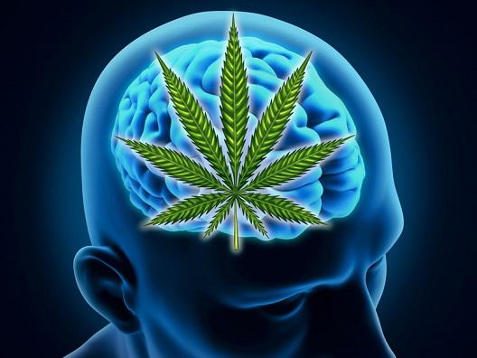 Малата доза канабис секој ден го чува мозокот од стареење?