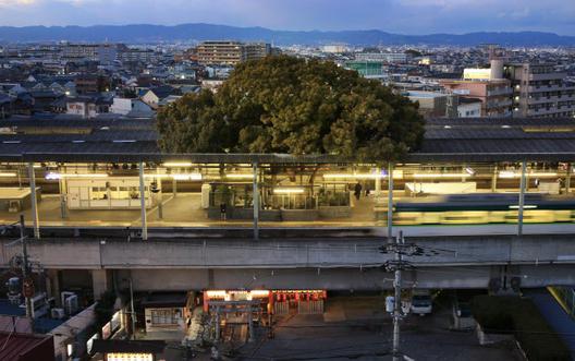 Како Јапонците изградија железничка станица околу едно дрво