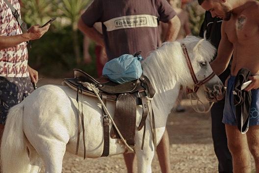 Коњче