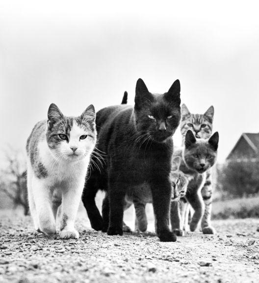 Мачки против птици: линија на раздвојување