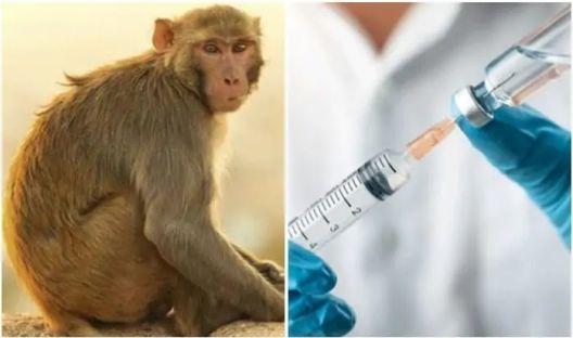 Недостасуваат мајмуни за испитувања
