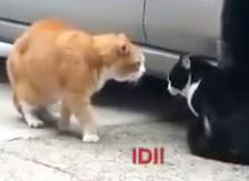 Две мачки