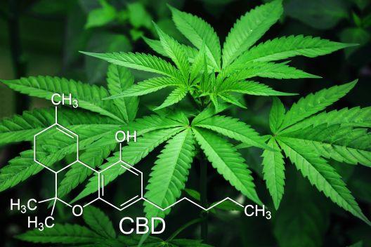 Зошто е неопходно да се легализира марихуаната?