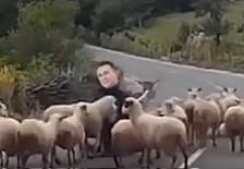 Овците против Пастирот