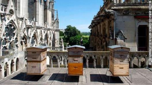 Пчелите на Нотр Дам го преживеале пожарот