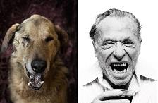 Поетични кучиња