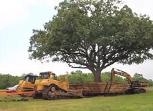 Преселбата на едно дрво