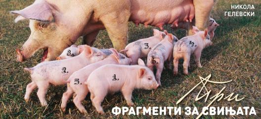 Три фрагменти за свињата