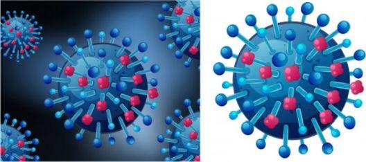 Вирусите не се размножуваат туку се реплицираат. На границата на живото и неживото. Сепак, еволуираат